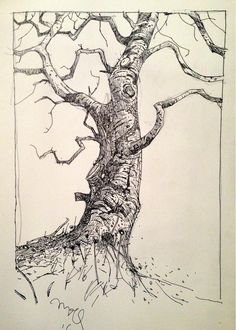 Ian McQue on - Josefine Tree Sketches, Drawing Sketches, Pen Sketch, Ink Pen Drawings, Realistic Drawings, Sketchbook Inspiration, Art Sketchbook, Ink Illustrations, Illustration Art