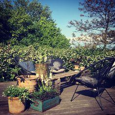 Vores nye hyggekrog i haven