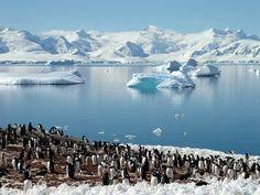 Muitos Pinguins <3