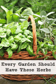 It is time to think about your herb garden. Every garden should have these herbs and here are some ideas on where to plant them