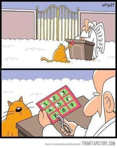 Heaven Isn't Too Far Away - LOLcats is the best place to find and submit funny cat memes and other silly cat materials to share with the world. We find the funny cats that make you LOL so that you don't have to. Funny Cartoons, Funny Comics, Funny Jokes, Kid Jokes, Cartoon Humor, Funny Gifs, Videos Funny, I Love Cats, Crazy Cats