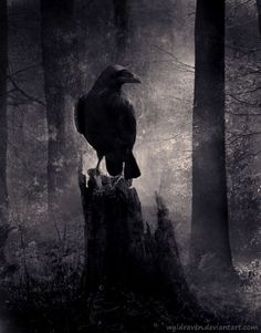halloween ravens | Creepy raven in the woods... | Halloween