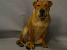 TO BE DESTROYED 11/04/16 **NEW HOPE RESCUE ONLY**