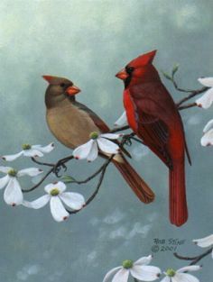 Kim Norlien Winter Cardinals Them, The Winter And Search - 371x493 - jpeg