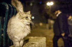 Photo Story: The Stray Cats of Israel | Urban Travel Blog