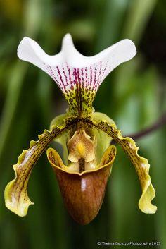 Orquídea colombiana