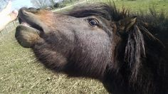 Jackson!  a mini horse rescue at Tiny Hooves Rescue farm :)  www.tinyhooves.org