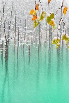 Green Pond & Yellow Leaves、Hokkaido by KentShiraishi
