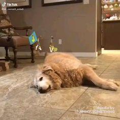 Animal Jokes, Funny Animal Memes, Cute Funny Animals, Funny Animal Pictures, Cute Baby Animals, Funny Cute, Dog Memes, Hilarious, Memes Humor