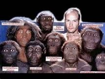 Timeline Homo Sapiens - Yahoo Image Search Results