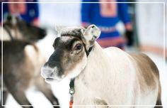 Ord- og bildekort: en gavepakke for TPO Discovery, Religion, Animals, Teaching, Life, Culture, Animales, Animaux, Religious Education