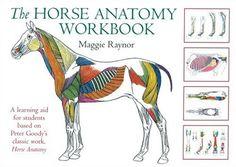 Amazon.com: The Horse Anatomy Workbook (Allen Student) (9780851319056): Maggie Raynor: Books
