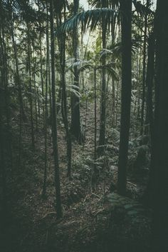 Maiala by Jared Fowler, via Behance #nature #forest #photography #green