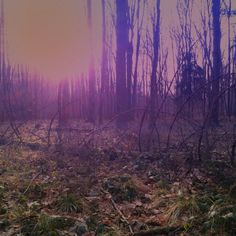 #forest#morning#purple#photo#