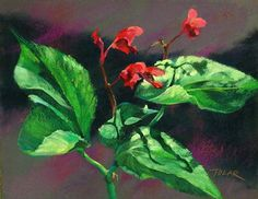 Bob Bahr reporting, Editor PleinAir Today - Jude Tolar paints portraits of flowers outdoors, but it's not just about the individual flower. It…