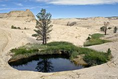 Pool of Water, Grand Staircase, Escalante National Monument, Utah; Bryce National Park, National Parks, Escalante National Monument, Grand Staircase, Natural Wonders, Natural World, Pretty Pictures, Places To See, Utah
