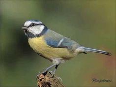 Vogels Nederland Tuin : Beste afbeeldingen van vogels in de tuin in beautiful