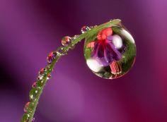 Amazing Water Drops Macro Photography - for reals Dew Drops, Rain Drops, Water Drop Photography, Nature Photography, Photography Flowers, Photography Tips, Drip Drop, Fotografia Macro, Water Droplets