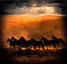 Wild Run - HORSE PHOTOGRAPHY :: BEV PETTIT FINE ART EQUINE PHOTOGRAPHY