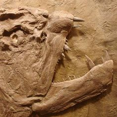 Image result for what do fossil dinosaur teeth look like