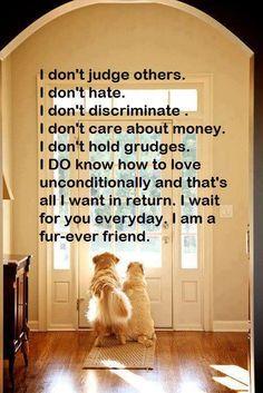 Fur-ever Friend <3