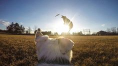 GoPro on a dog and he took this https://www.facebook.com/thisisgoodstuffetc