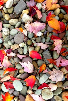 Fall leaves can inspire your interior design with warm colors ~ Renovator's Supply