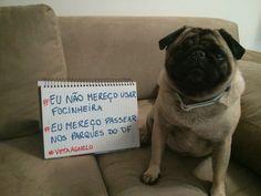 Pug Bóris indo protestar na Cãominhada