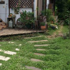 セダム/多肉植物/ジャンクガーデン/DIY/玄関前/植物…などのインテリア実例 - 2015-06-25 23:08:41 | RoomClip(ルームクリップ)