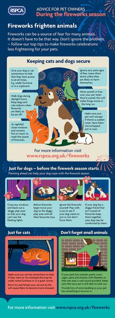 Advice for pets owners during the fireworks season © RSPCA - Remember, remember