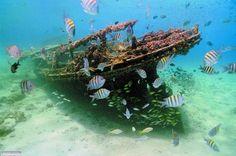 Explore a Ship wreck