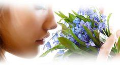 Encontre Seu Perfume- TROUVER VOTRE PARFUM  (E.S.P): Como decidir qual é o perfume certo para si? Um Gu...