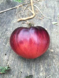 Blue Tomato Seeds AFTERNOON DELIGHT 15 Seeds Vegetable Garden