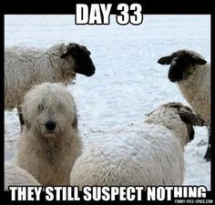 Day 33: They still suspect nothing