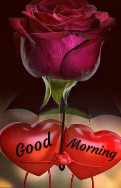 Good Morning Flowers Pictures, Good Morning Friends Images, Good Night Flowers, Good Morning Roses, Good Morning Cards, Good Morning Beautiful Images, Good Morning Gif, Good Morning Picture, Good Morning Greetings