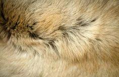 textuur hond - Google zoeken