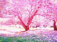 Google Image Result for http://fc01.deviantart.net/fs25/i/2008/124/a/e/cherry_blossoms_by_loverlyness.jpg