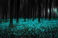 teal-lit fairy forest...