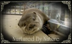 Nurtured By Nature Non profit that lets you swim with dolphins and play with animals in San Diego!! <3