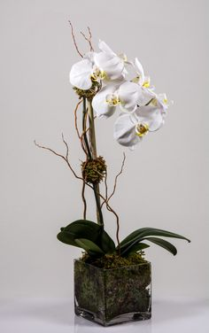 #white #orchids #curlywillow #starbright #starbrightnyc Curly Willow, Orchid Plants, White Orchids, Bright