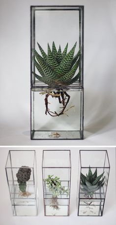 17 Ways To Introduce Botanical Design Into Your Home Decor   Display a hydroponic terrarium so you can enjoy your plants and have a conversation starter.