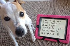 dogs-who-are-shamelessly-proud-of-what-they-just-did-1