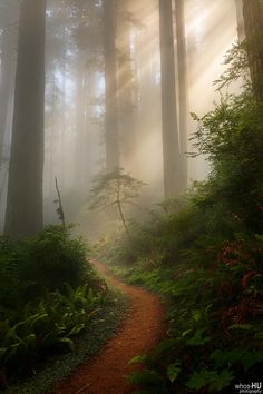 The path in Redwoods National Park [8001200] OC #reddit