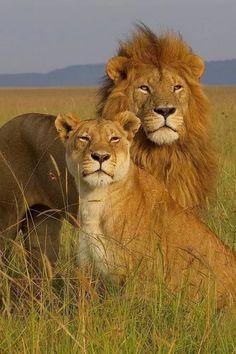The Royals of Masai Mara