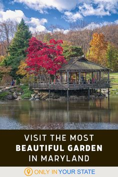 Discover a beautiful garden in a local Maryland park that's a sight to be seen in all seasons. The trees, flowers, and foliage will delight kids and adults alike. It's a great day trip! Most Beautiful Gardens, Beautiful Things, Maryland Parks, Best Bucket List, Hidden Beach, Swimming Holes, Ghost Towns, Natural Wonders, Day Trip