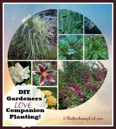 A talented group of Garden Charmers love companion planting…