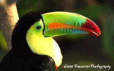 Tucan's beaks are artwork