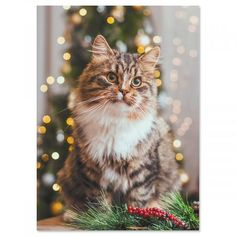 Inside: May the Christmas season fill your home with joy and your heart with love. x Current cards are printed in the USA! Cat Christmas Cards, Christmas Greetings, All Things Christmas, Holiday Cards, Current Catalog, White Envelopes, Reindeer, Joy, Seasons