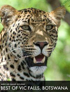 rohoyachui - Best of Victoria Falls & Botswana 2017 Safari Adventure, Victoria Falls, I Have A Dream, African Safari, Tours, Animals, Animales, Animaux, Animal