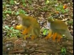 Amazônia Francesa (Globo Repórter / 2008)